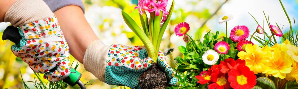 gardening-monsanto